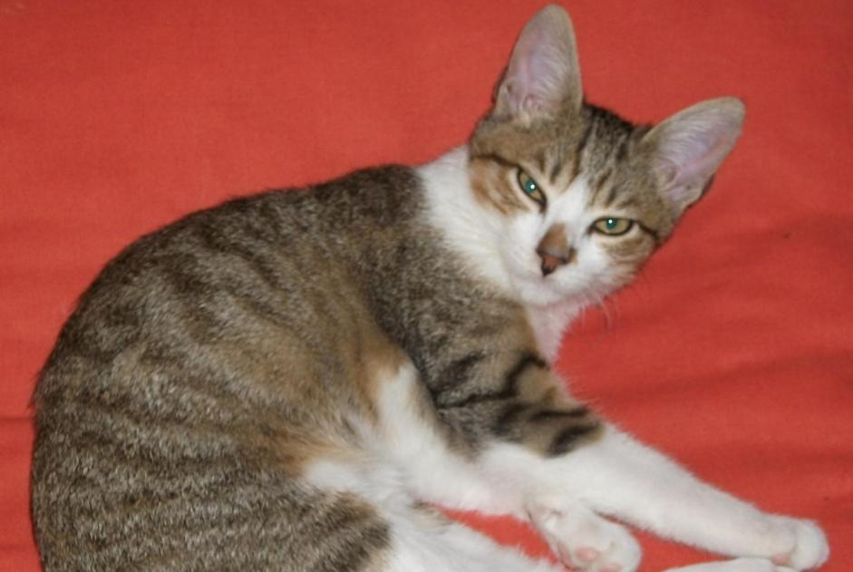 Disappearance alert Cat  Female , 9 years Italy Italy
