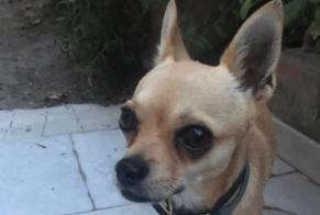 Discovery alert Dog  Male , 2 years Via Cantone Italy