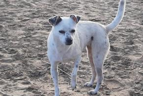 Discovery alert Dog miscegenation Female Alghero Italy