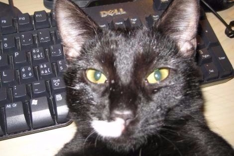Disappearance alert Cat miscegenation Male , 10 years Valladolid Spain